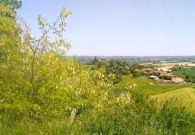 Acacia and the village of Sieuras
