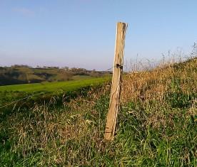 Acacia fence post